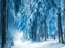 Essência Floresta de Inverno