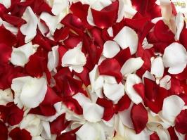 Essência Pétalas de Rosas