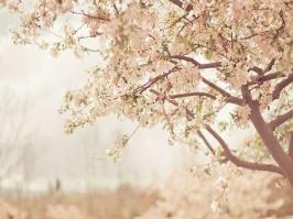 Essência Flor de Laranjeira Baby